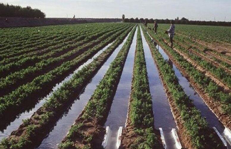 کشاورزان شمال خوزستان کشت پائیزه و زمستانه را با تاخیر آغاز کنند